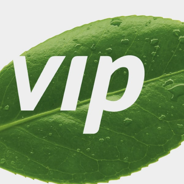 Davidson Branding Corporate VIP Logo Graphic Visual Language Leaf